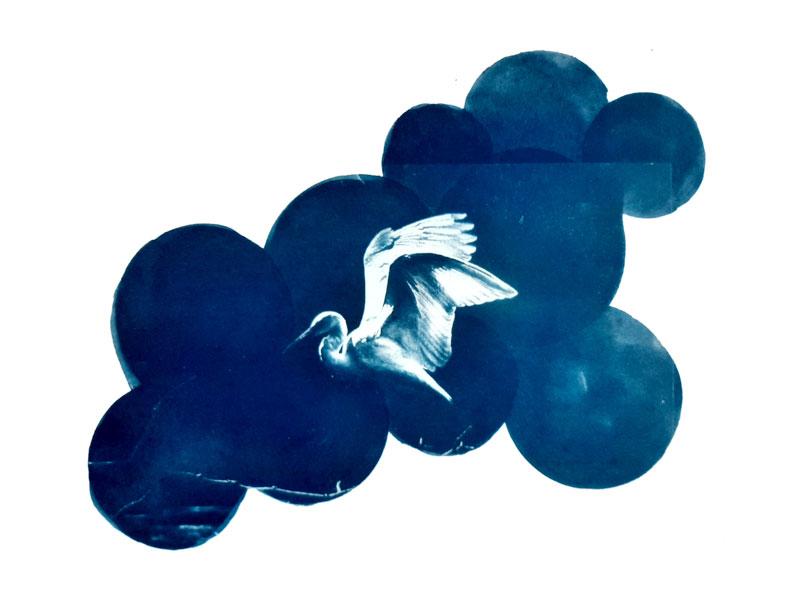 Aves de Chile - Kimberly Halyburton